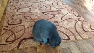 Кот все время делает вид что очень занят