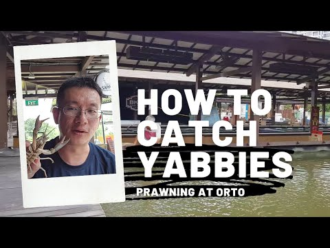Singapore Prawning - How To Catch Yabby (Tips And Tricks!) 🦐