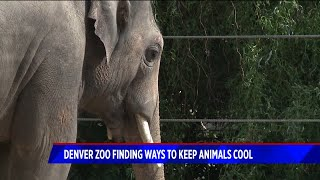 Denver Zoo animals keep cool in record-setting heat
