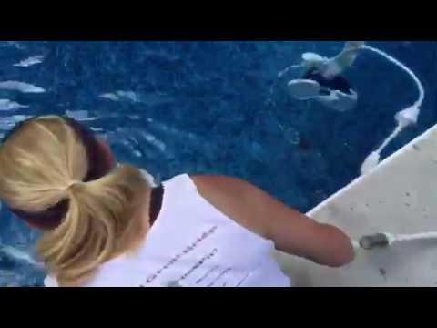 Pool polaris hook up