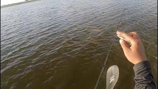 Epic Fail on Huge School of Redfish | #FRSHCatch