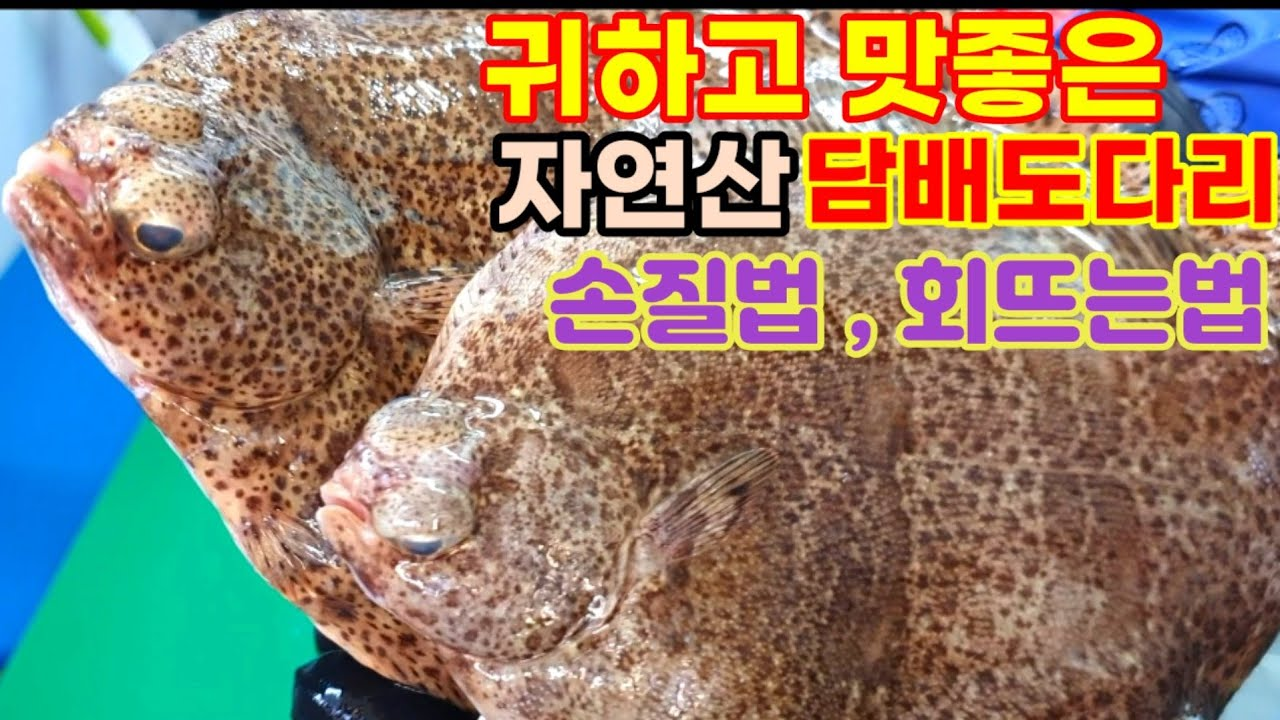 도다리 손질법 , 회써는 법 / finespotted flounder Sashimi
