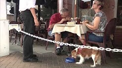 At the Table -- Dog Friendly Restaurants