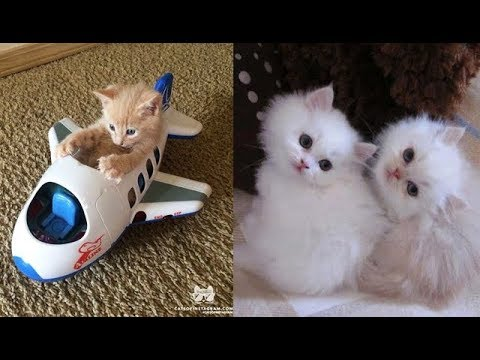 Cute baby animals Videos Compilation cute moment of the animals - Soo Cute! #45