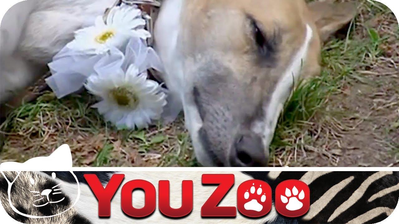 Hochzeit Mit Hund Tierisch Gut Youzoo Youtube