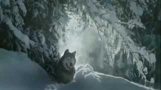 Волки . Короткометражный Фильм