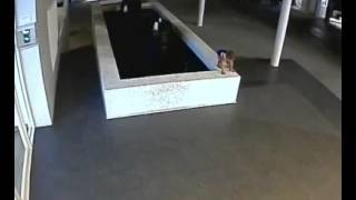 Baby drowns in pool caught by cctv