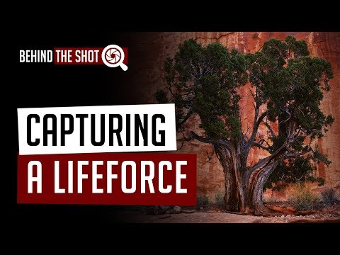 Capturing a Life Force - Large Format Wilderness Landscapes