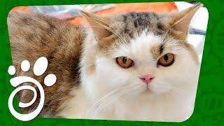 Девять Фактов Про Кошек. Все О Домашних Животных