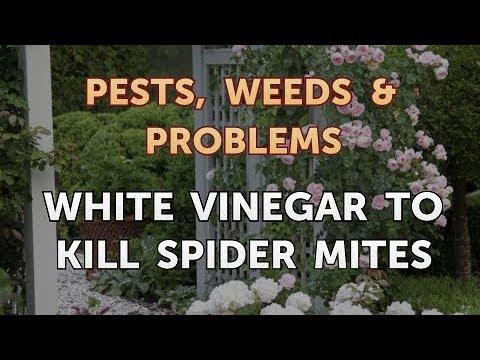 White Vinegar to Kill Spider Mites