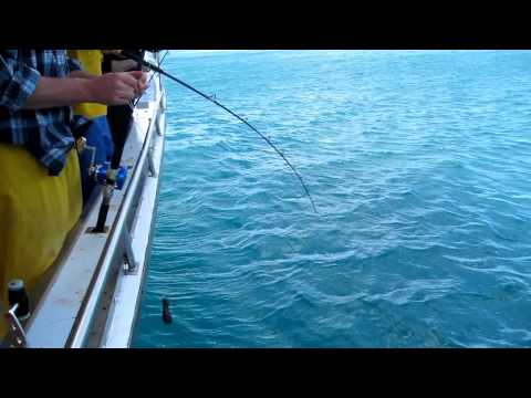 Cook Strait Fishing
