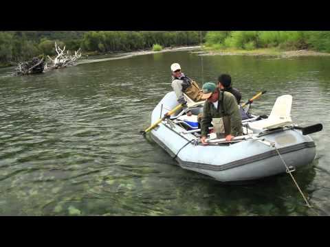 Argentine Trout, Golden Dorado & Dove Hunting.  HD Version