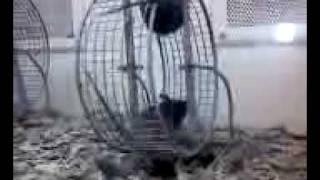 Funny Mice! Thumbnail