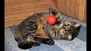 Самые смешные животные в мире Приколы с животными 2021 Дети и животные смешное видео