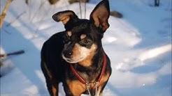 Siru Koiran muistolle