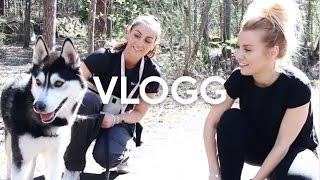 vlogg: EN DAG PÅ HUNDSTALLET