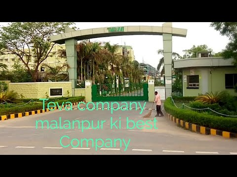 Teva Malanpur Ki Best Company || VijaypalVlogs