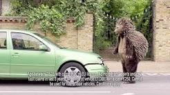 Temporary Car Insurance | Tempcover - Hedgehog Attack - Advert 2