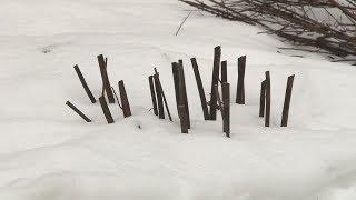 Сюжет ТСН24: В Туле неизвестные ночью остригли саженцы, недавно высаженные жителями