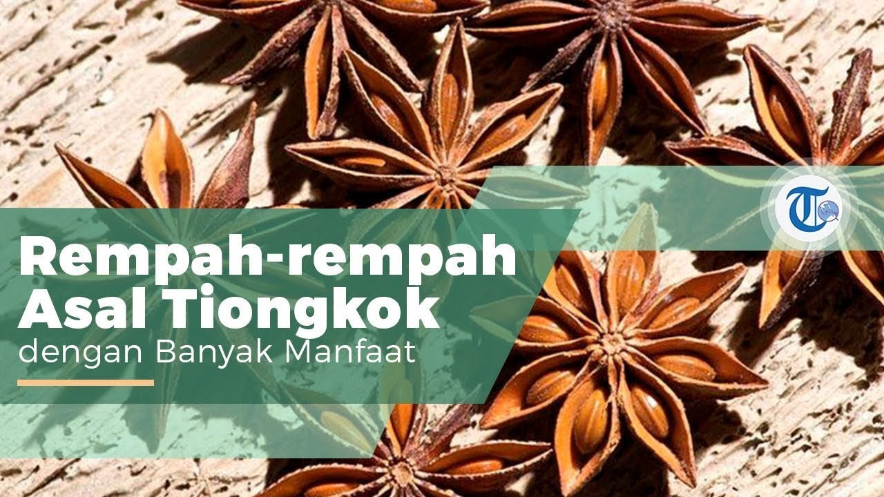 Bunga Lawang Atau Kembang Lawang Rempah Yang Digunakan Untuk Bumbu Masakan Di Negara Negara Asia Youtube