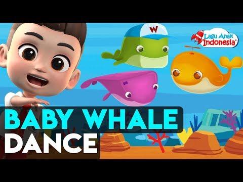 lagu-anak-indonesia-|-baby-whale-dance-doo-doo-doo-|-baby-shark-doo-doo-doo