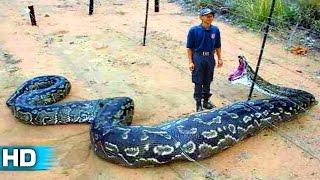 Dünyanın En Büyük 10 Yılanı
