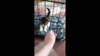 Kitten escapes new cage with ease.