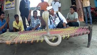    सांप पकड़ना कैसे सीखें (विषधर ) lndian Cobra snake Rescue Team Panchet dam Jharkhand