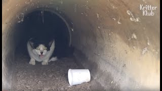 Cat Dragging Her Legs Is Hit By A Car And Fears Going Outside Again   Animal in Crisis EP63