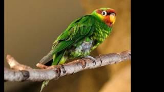 Виды попугаев. Вторая часть.