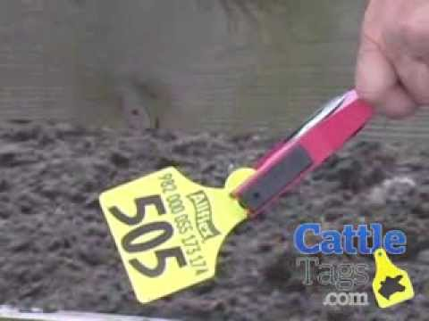 How To Apply Cattle Tags