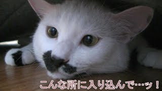 カーペットの下から出てこないフク姫 面白い 可愛い猫