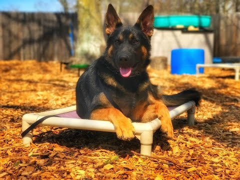 Providence Dog Trainers: Titus the GSD | Amazing Off Leash Obedience | Best Dog Trainers in RI
