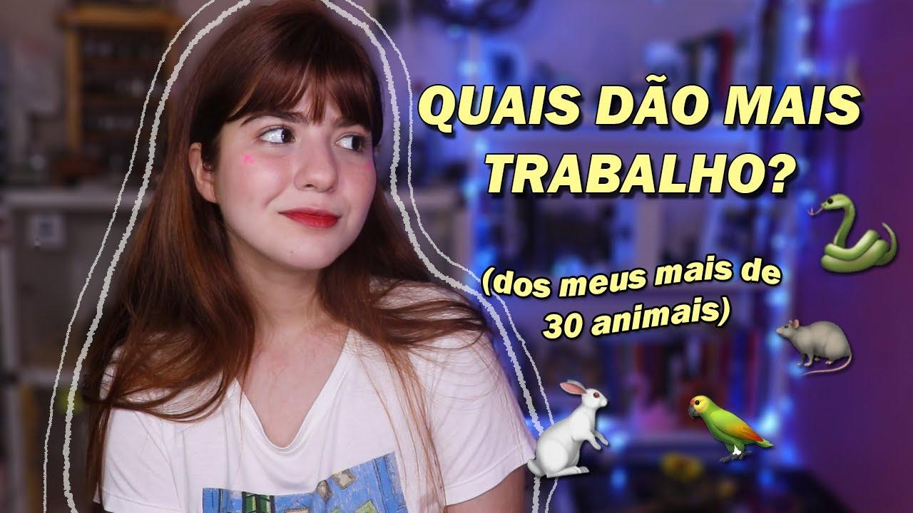 OS 5 ANIMAIS DE ESTIMAÇÃO MAIS DIFÍCEIS DE CUIDAR!