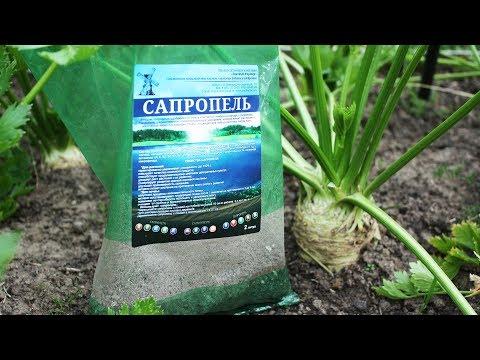видео: Вековой эликсир плодородия – сапропель. Что это такое