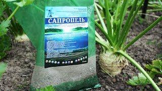 Вековой эликсир плодородия – сапропель. Что это такое