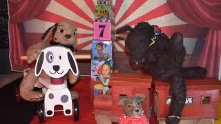 Tootsie Dog Circus
