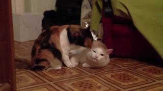 Кот и кошка (Cat's in love)