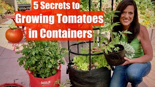 5 Secrets to Grow LOTS of Tomatoes in Containers / Container Garden Series #1🍅🍅🍅