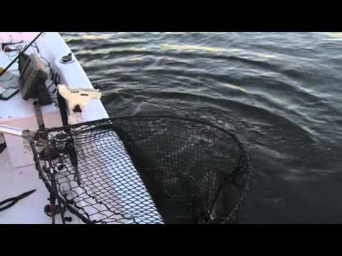 Structure fishing season 1 show 5 lake kinkaid muskies for Kinkaid lake fishing report
