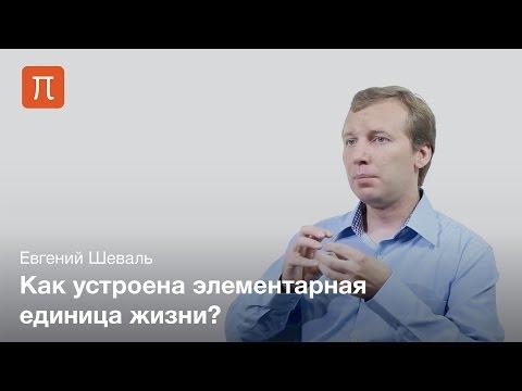 Евгений Шеваль - Клеточные органеллы