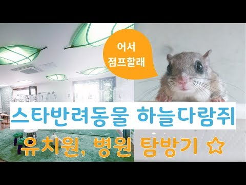하늘다람쥐 유치원과 병원 탐방기! 귀여움 우