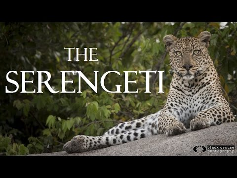 The Serengeti - A Wildlife Safari Adventure in Tanzania Full HD