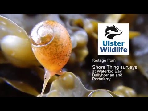 Shoreline Marine Life in Northern Ireland