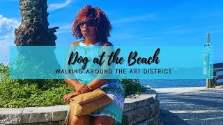 Dog at the Beach | Walking Around the Art District
