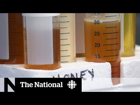 Canadian Beekeepers Feeling The Sting Of Foreign, Fake Honey