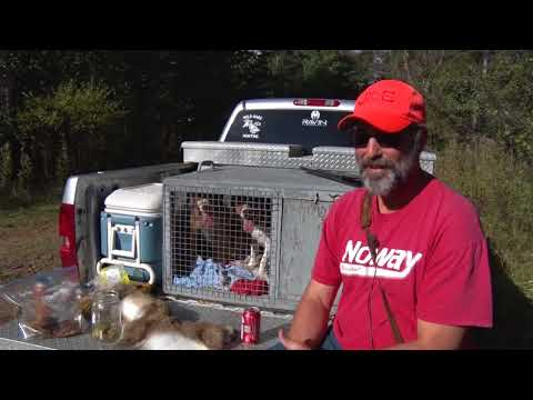 50 year camp tradition - rabbit hunting and rabbit feed