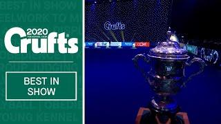 Best In Show at Crufts 2020 | Crufts 2020