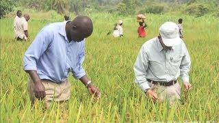 Japan in Africa: Feeding hopes for a bright future through agriculture
