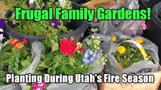 Frugal Family Gardens! Planting Flowers During Fire Season in Utah!